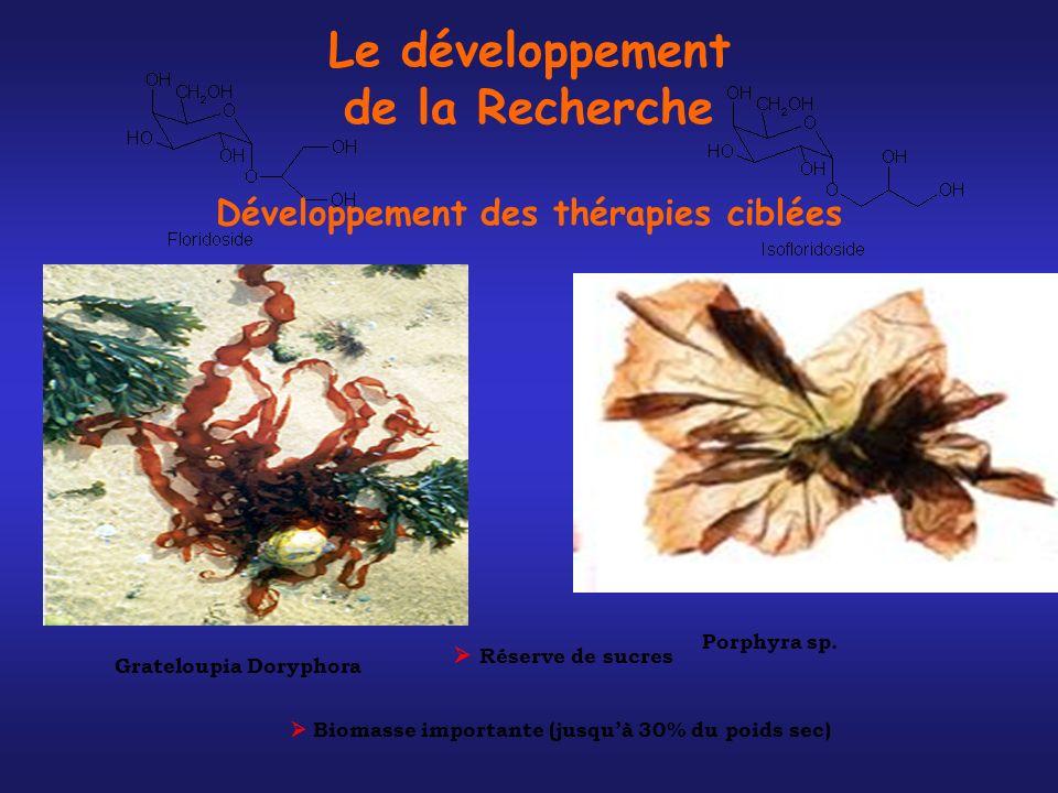 Grateloupia Doryphora Porphyra sp. Réserve de sucres Biomasse importante (jusquà 30% du poids sec) Le développement de la Recherche Développement des
