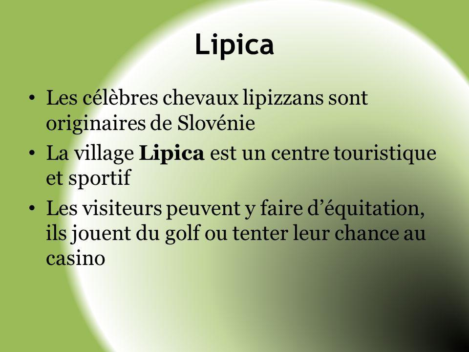 Lipica Les célèbres chevaux lipizzans sont originaires de Slovénie La village Lipica est un centre touristique et sportif Les visiteurs peuvent y fair