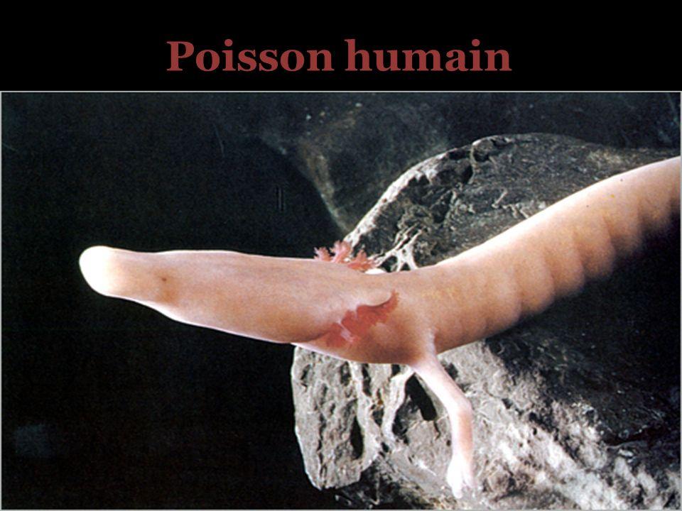 Poisson humain
