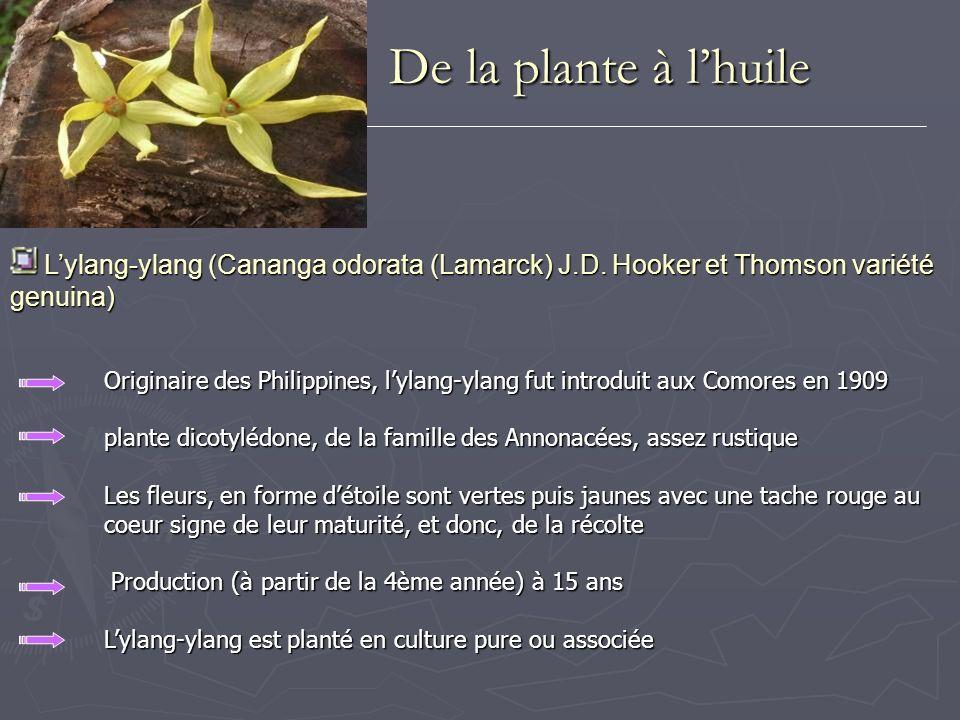 Lhuile essentielle Lhuile essentielle Lhuile essentielle dylang-ylang est obtenue par distillation des fleurs fraîches recueillie en cinq fractions successives au cours de sa distillation « Extra supérieure », « Extra », « Première », « Deuxième » et « Troisième » Le rendement en huile varie selon la saison, la durée de distillation en conditions normales = 2 à 2,25 % 100 kg de fleurs fraîches = 2 à 2,25 kg dhuile, toutes catégories confondues De la plante à lhuile