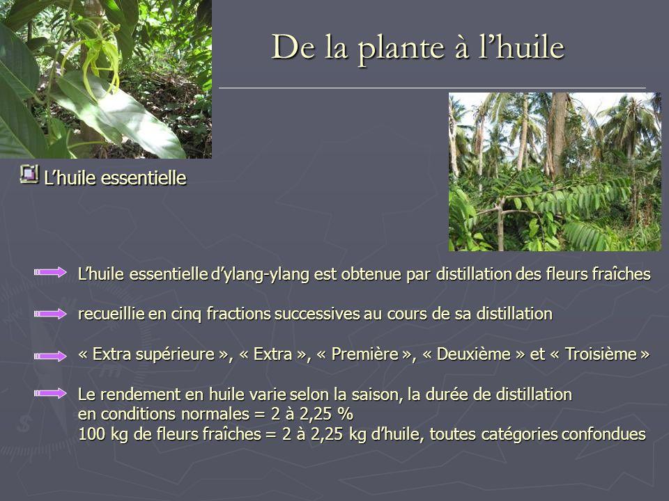 Lhuile essentielle Lhuile essentielle Lhuile essentielle dylang-ylang est obtenue par distillation des fleurs fraîches recueillie en cinq fractions su