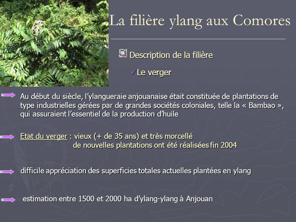 Description de la filière difficile appréciation des superficies totales actuelles plantées en ylang Etat du verger : vieux (+ de 35 ans) et très morc