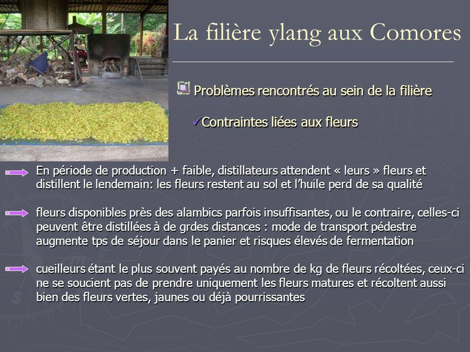 En période de production + faible, distillateurs attendent « leurs » fleurset distillent le lendemain: les fleurs restent au sol et lhuile perd de sa
