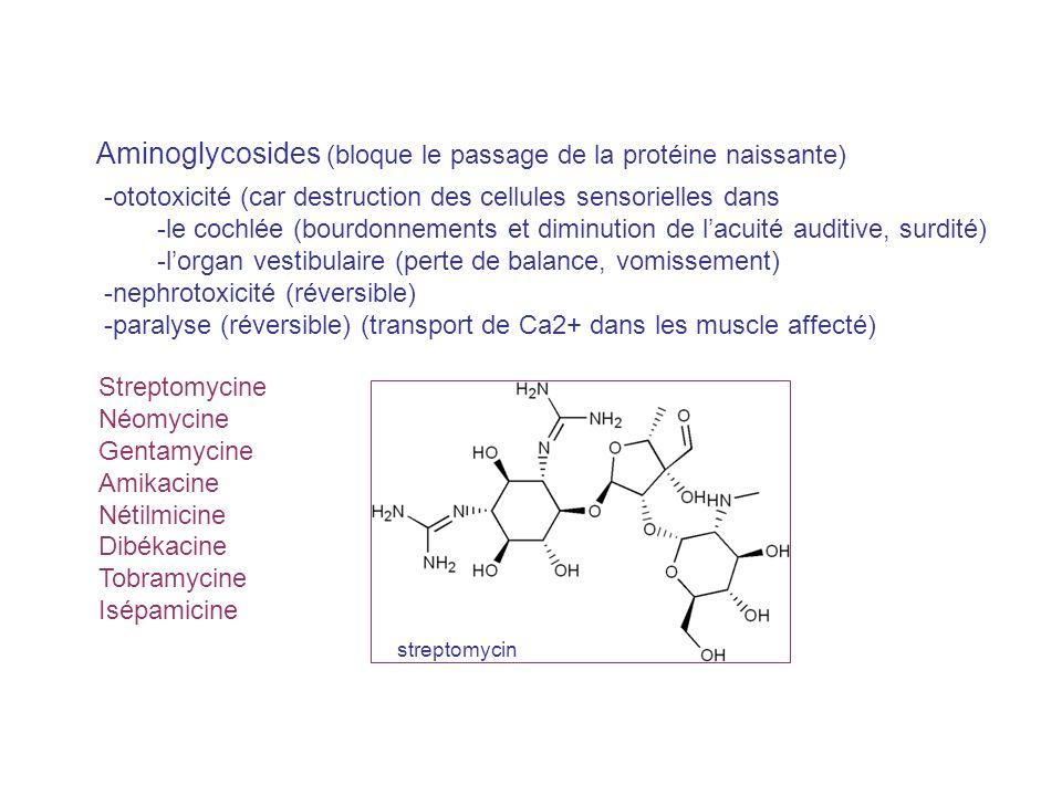 Aminoglycosides (bloque le passage de la protéine naissante) Streptomycine Néomycine Gentamycine Amikacine Nétilmicine Dibékacine Tobramycine Isépamic