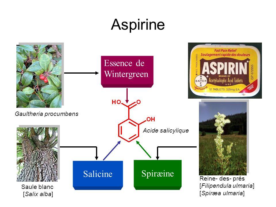 Aspirine Saule blanc [Salix alba] Salicine Reine- des- prés [Filipendula ulmaria] [Spiræa ulmaria] Spiræine Gaultheria procumbens Essence de Wintergre