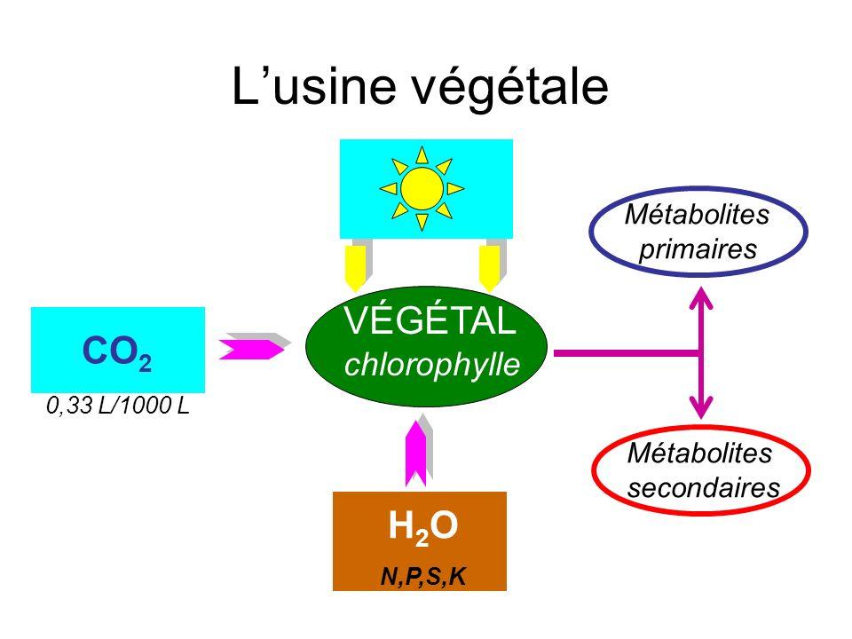 Lusine végétale CO 2 VÉGÉTAL chlorophylle H2OH2O N,P,S,K Métabolites primaires Métabolites secondaires CO 2 0,33 L/1000 L