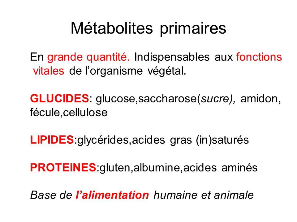 Métabolites primaires En grande quantité. Indispensables aux fonctions vitales de lorganisme végétal. GLUCIDES: glucose,saccharose(sucre), amidon, féc