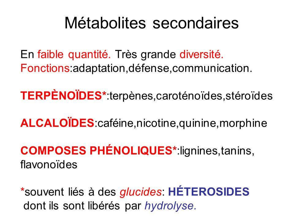 Métabolites secondaires En faible quantité. Très grande diversité. Fonctions:adaptation,défense,communication. TERPÈNOÏDES*:terpènes,caroténoïdes,stér