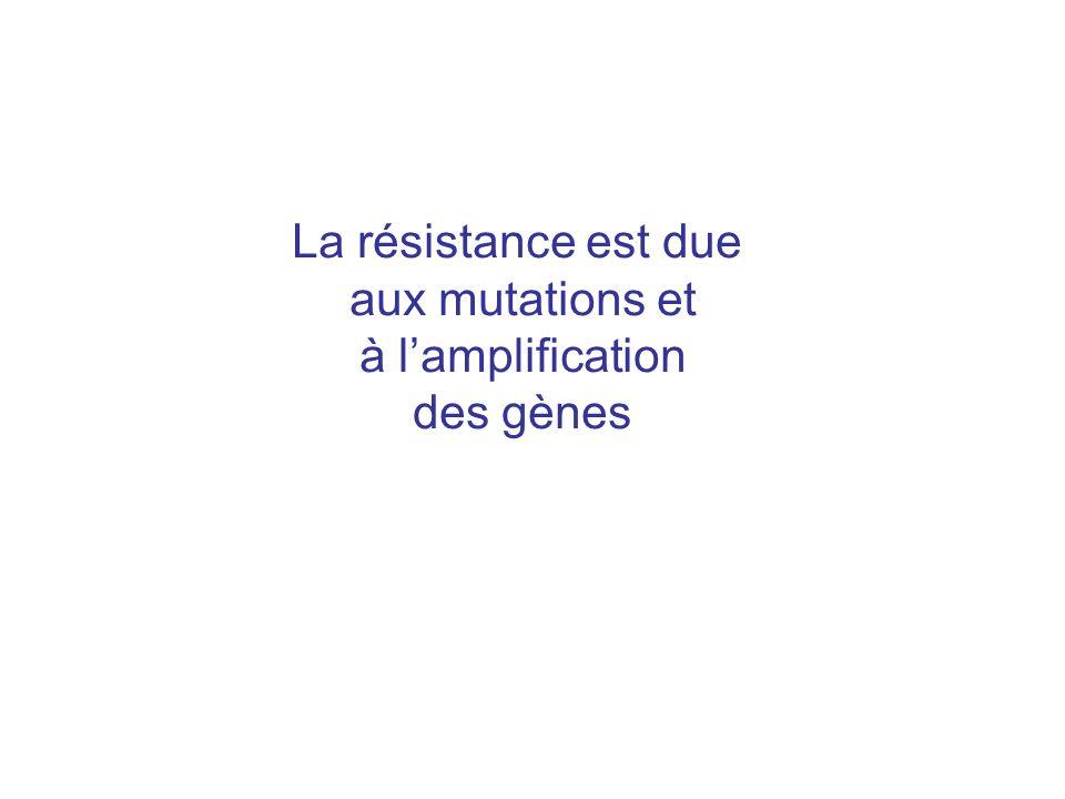 La résistance est due aux mutations et à lamplification des gènes