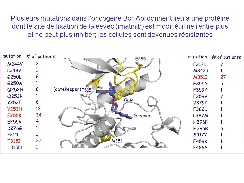 Plusieurs mutations dans loncogène Bcr-Abl donnent lieu à une protéine dont le site de fixation de Gleevec (imatinib) est modifié: il ne rentre plus et ne peut plus inhiber; les cellules sont devenues résistantes