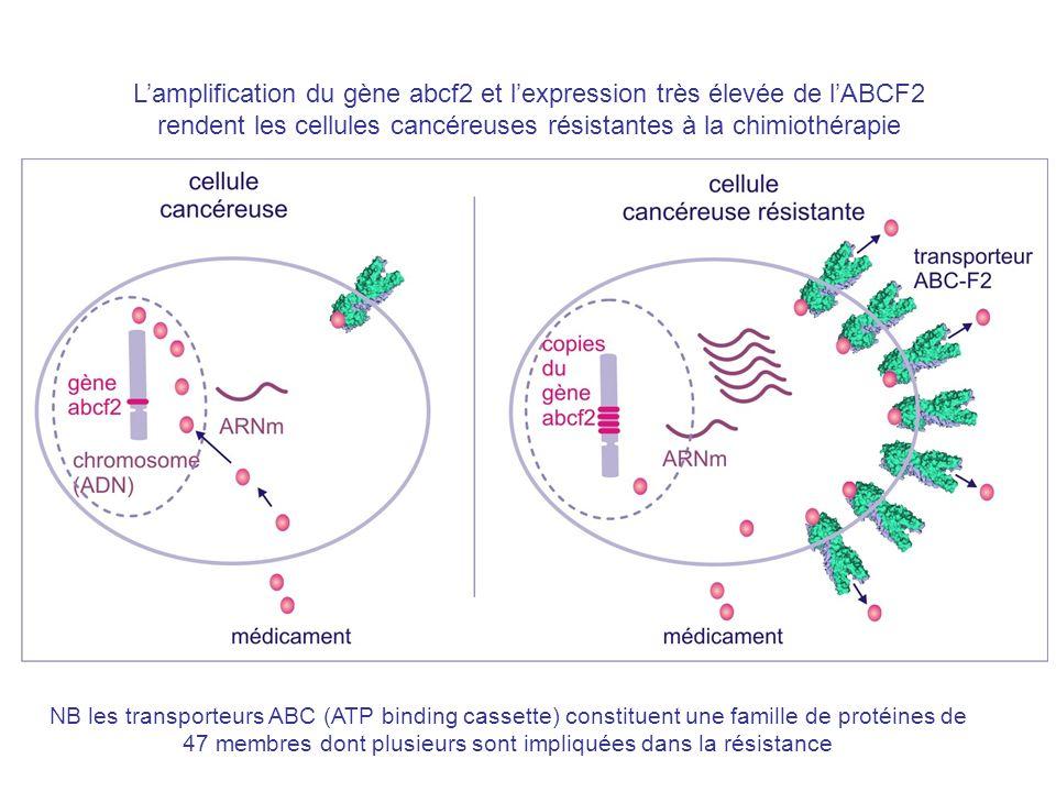 Lamplification du gène abcf2 et lexpression très élevée de lABCF2 rendent les cellules cancéreuses résistantes à la chimiothérapie NB les transporteurs ABC (ATP binding cassette) constituent une famille de protéines de 47 membres dont plusieurs sont impliquées dans la résistance
