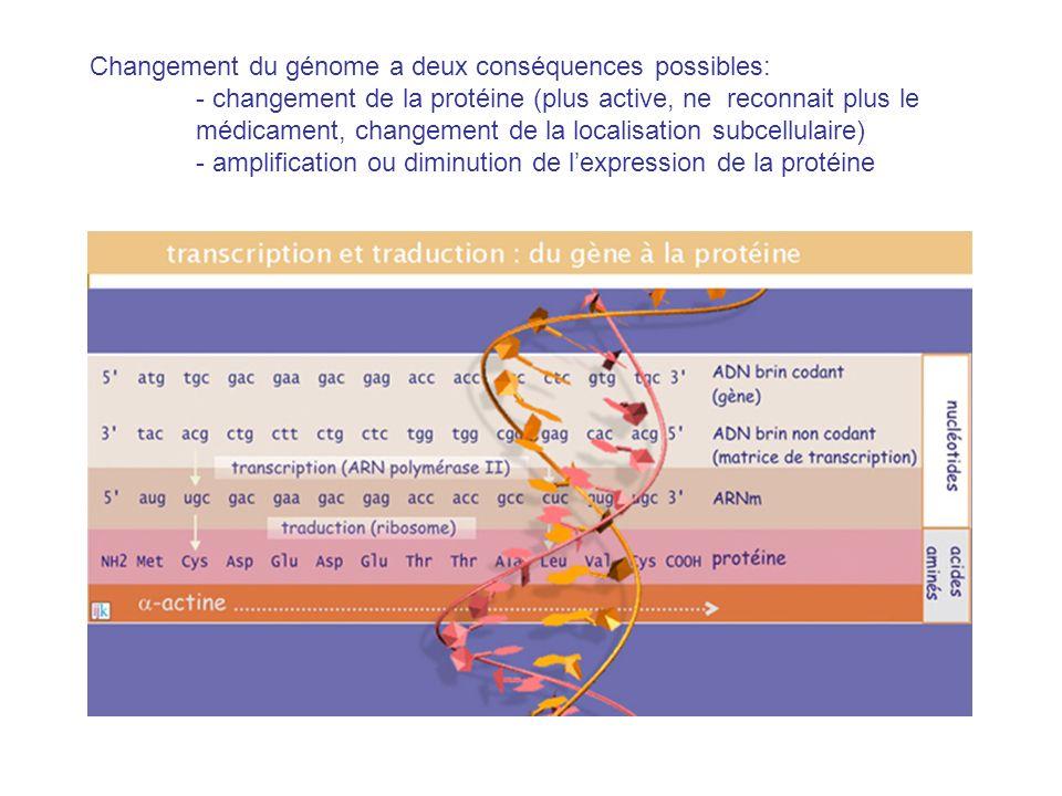 Changement du génome a deux conséquences possibles: - changement de la protéine (plus active, ne reconnait plus le médicament, changement de la localisation subcellulaire) - amplification ou diminution de lexpression de la protéine