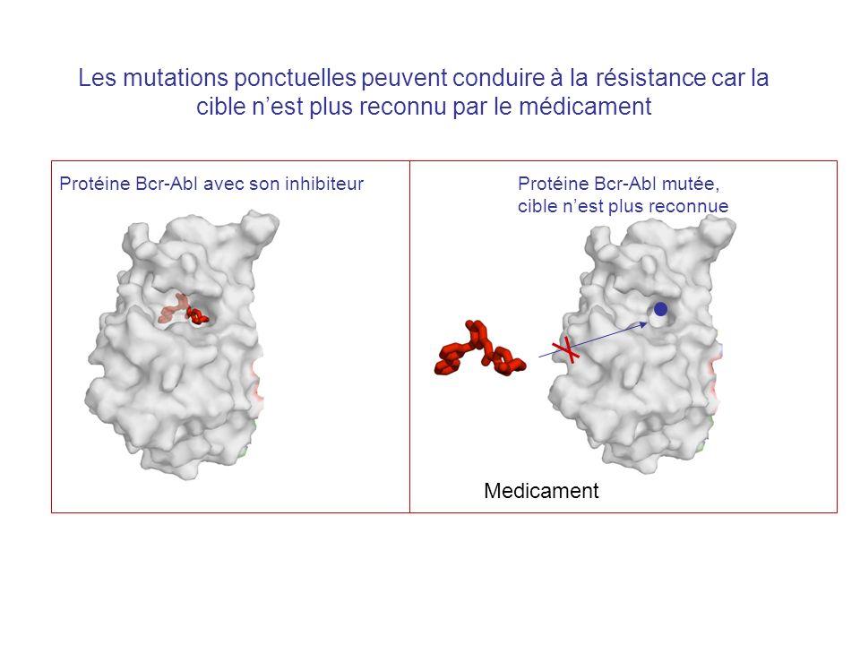 Les mutations ponctuelles peuvent conduire à la résistance car la cible nest plus reconnu par le médicament Protéine Bcr-Abl avec son inhibiteurProtéine Bcr-Abl mutée, cible nest plus reconnue Medicament