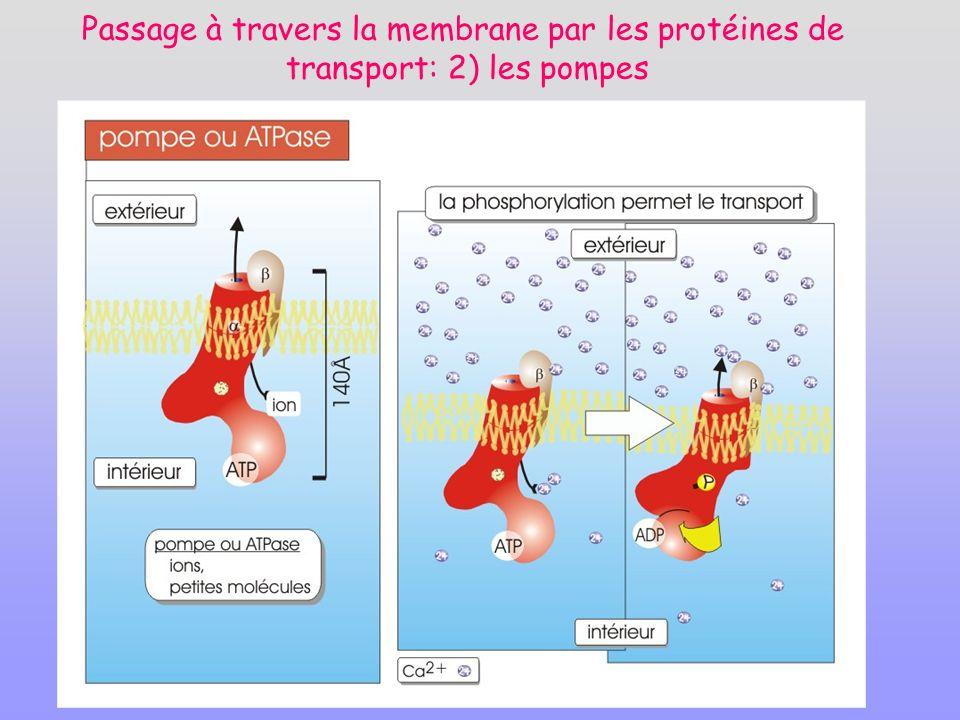 Passage à travers la membrane par les protéines de transport: 2) les pompes