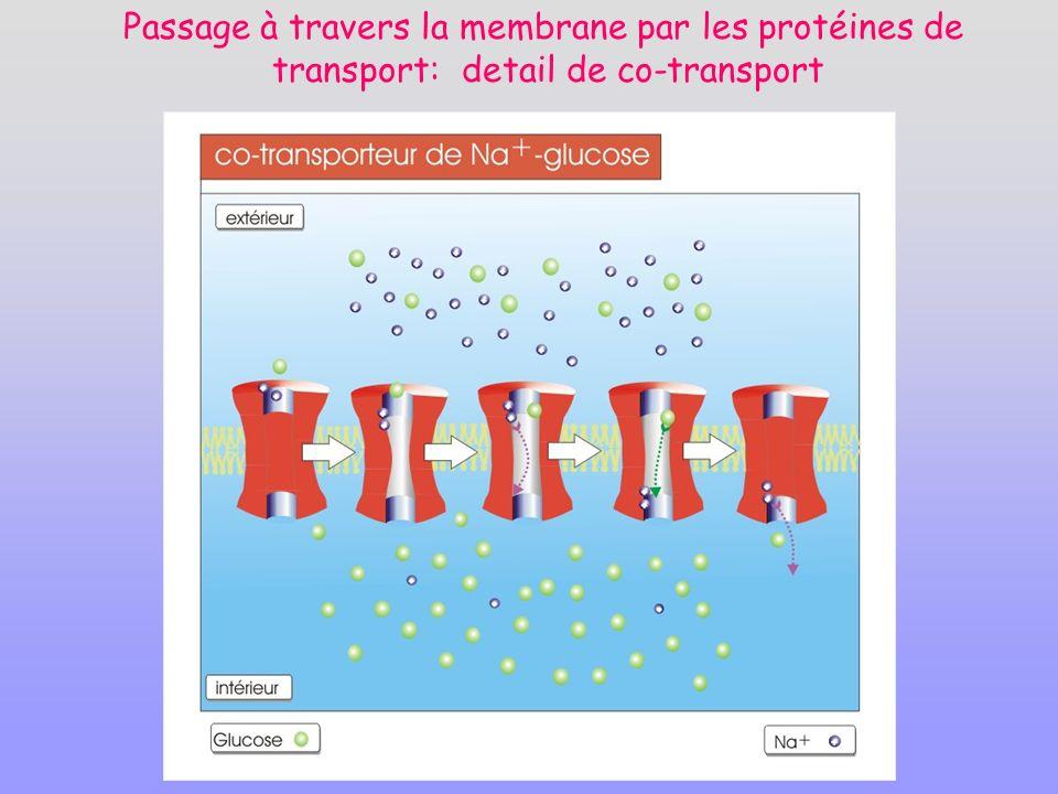 Passage à travers la membrane par les protéines de transport: detail de co-transport