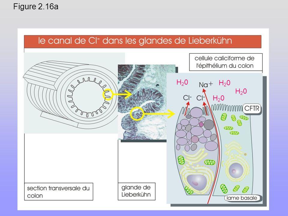 Figure 2.16a H20H20 H20H20 H20H20 H20H20