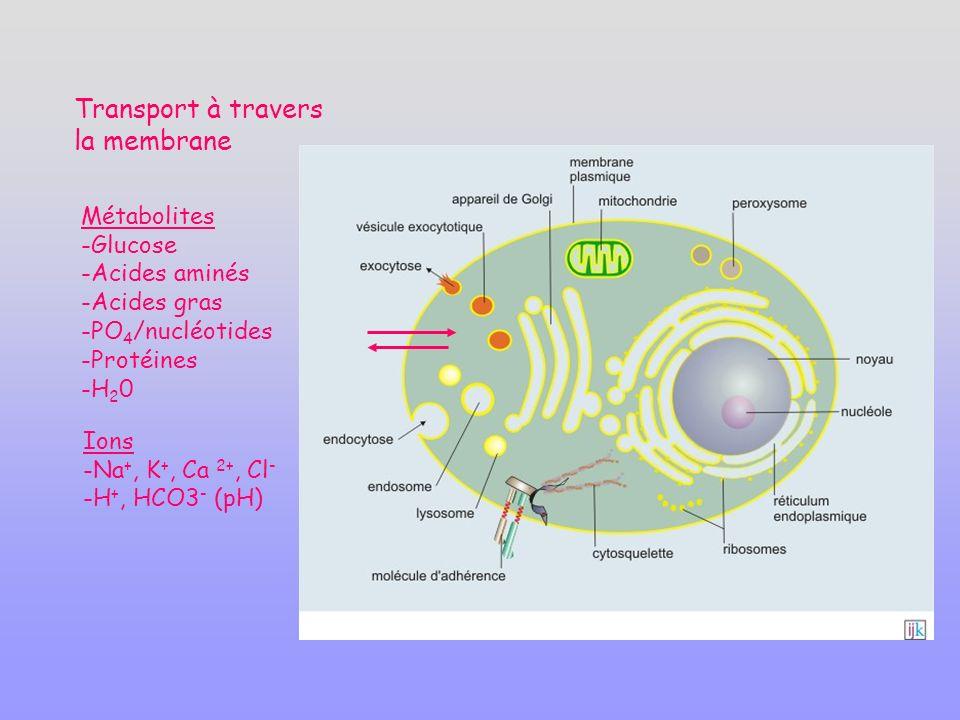 Métabolites -Glucose -Acides aminés -Acides gras -PO 4 /nucléotides -Protéines -H 2 0 Ions -Na +, K +, Ca 2+, Cl - -H +, HCO3 - (pH) Transport à travers la membrane