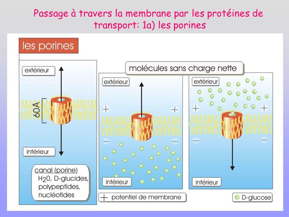 Passage à travers la membrane par les protéines de transport: 1a) les porines