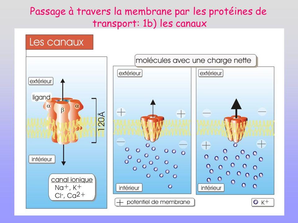 Passage à travers la membrane par les protéines de transport: 1b) les canaux
