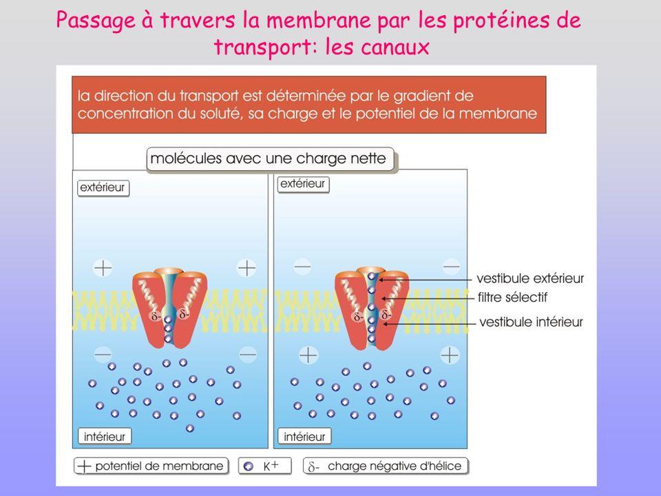 Passage à travers la membrane par les protéines de transport: les canaux