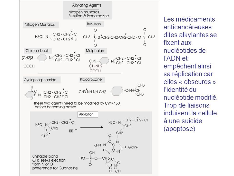 Les médicaments anticancéreuses dites alkylantes se fixent aux nucléotides de lADN et empêchent ainsi sa réplication car elles « obscures » lidentité