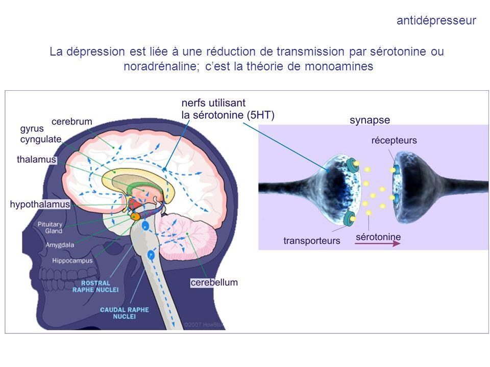 antidépresseur La dépression est liée à une réduction de transmission par sérotonine ou noradrénaline; cest la théorie de monoamines