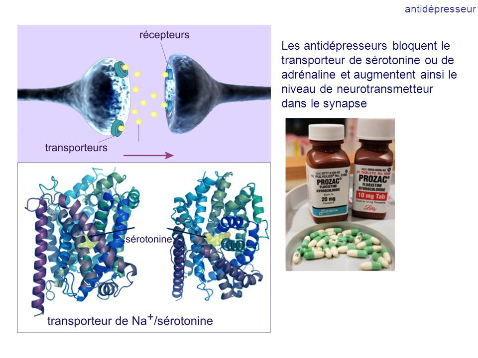 antidépresseur Les antidépresseurs bloquent le transporteur de sérotonine ou de adrénaline et augmentent ainsi le niveau de neurotransmetteur dans le