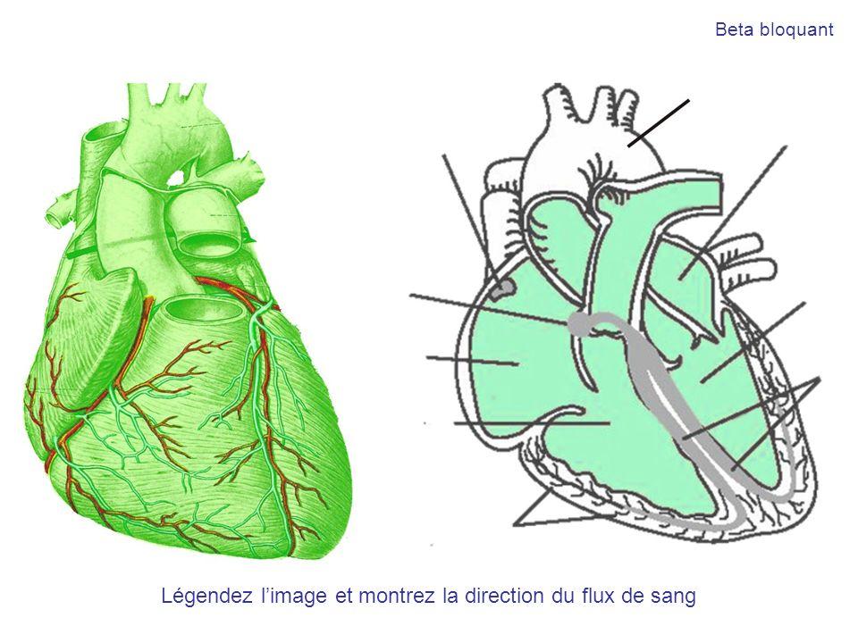 Légendez limage et montrez la direction du flux de sang Beta bloquant