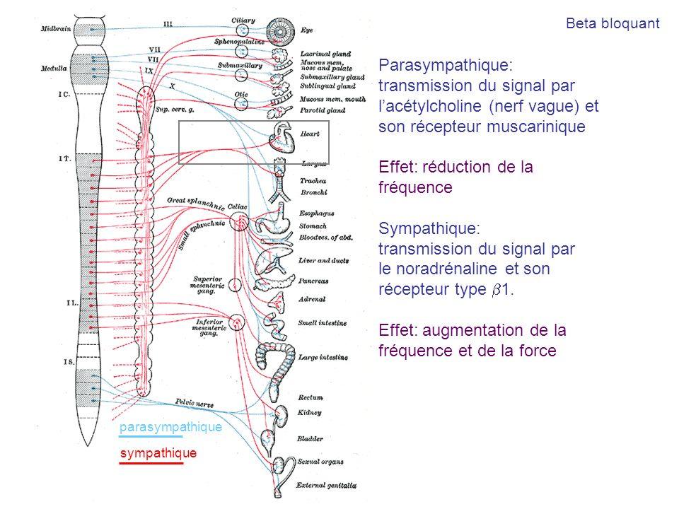 Parasympathique: transmission du signal par lacétylcholine (nerf vague) et son récepteur muscarinique Effet: réduction de la fréquence Sympathique: tr