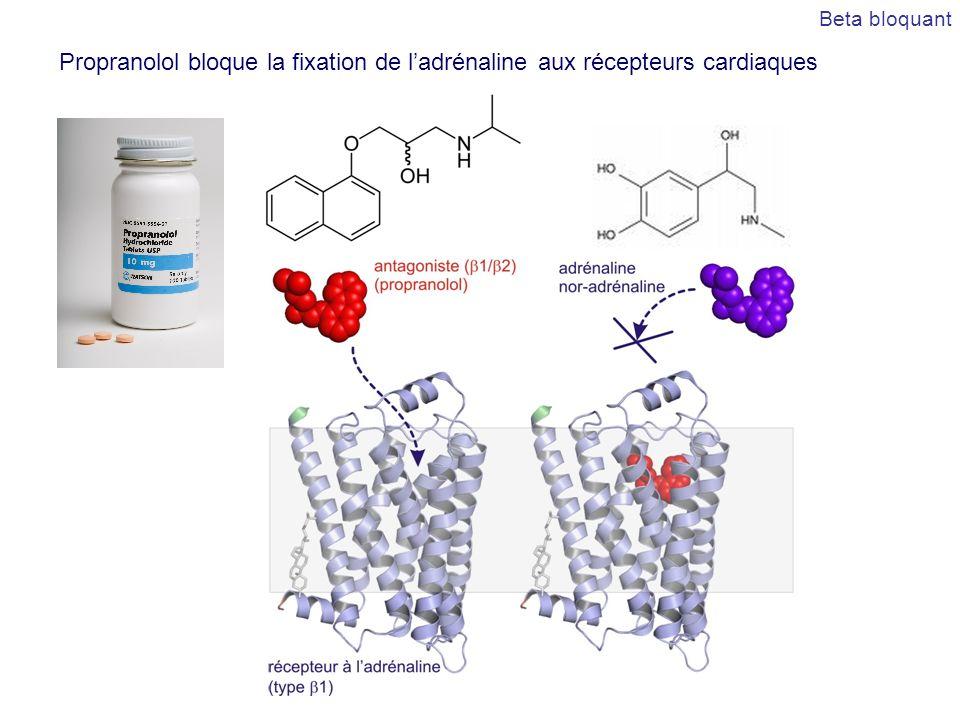 Propranolol bloque la fixation de ladrénaline aux récepteurs cardiaques Beta bloquant