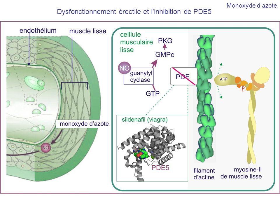Dysfonctionnement érectile et linhibition de PDE5