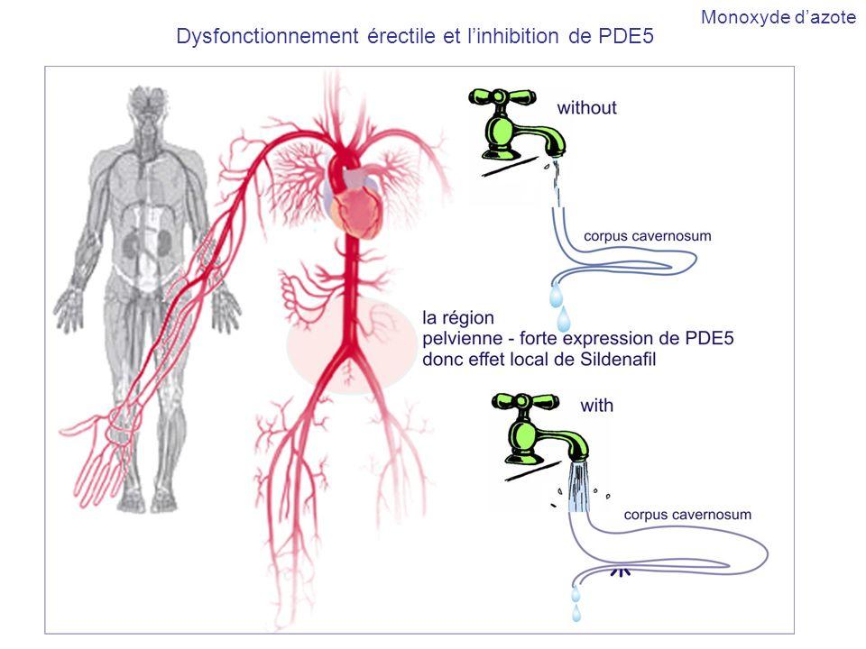 Sildenafil Monoxyde dazote Dysfonctionnement érectile et linhibition de PDE5