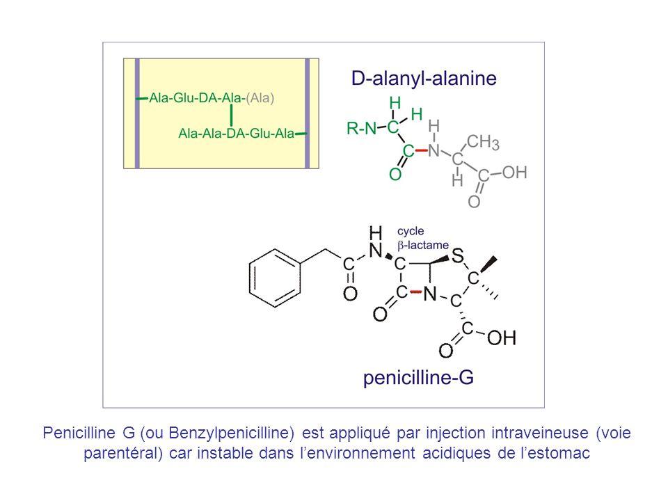 Penicilline G (ou Benzylpenicilline) est appliqué par injection intraveineuse (voie parentéral) car instable dans lenvironnement acidiques de lestomac