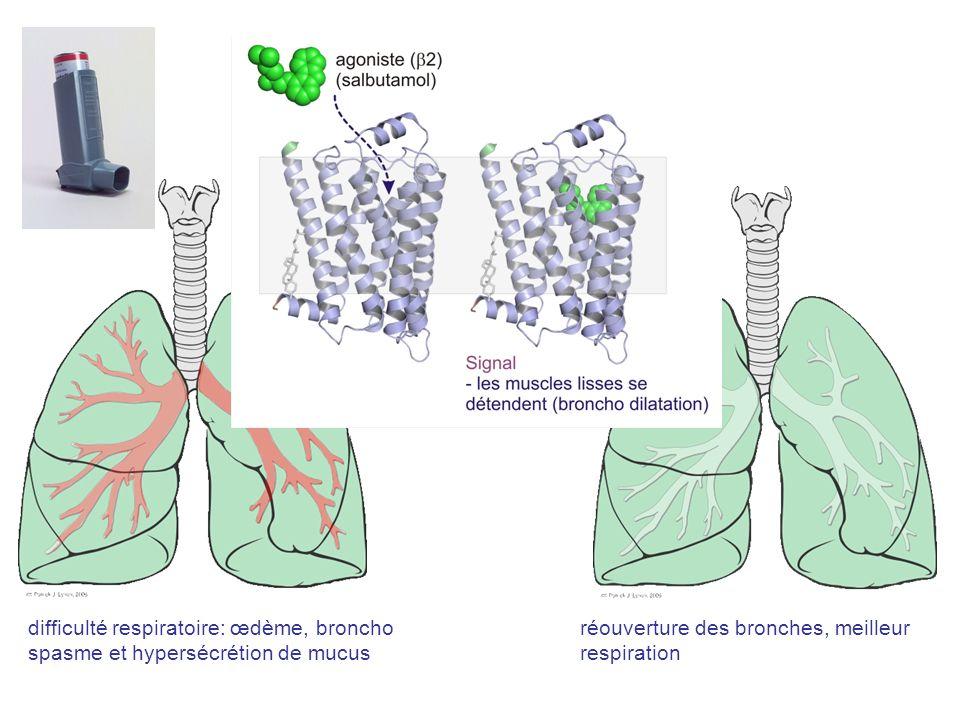 difficulté respiratoire: œdème, broncho spasme et hypersécrétion de mucus réouverture des bronches, meilleur respiration