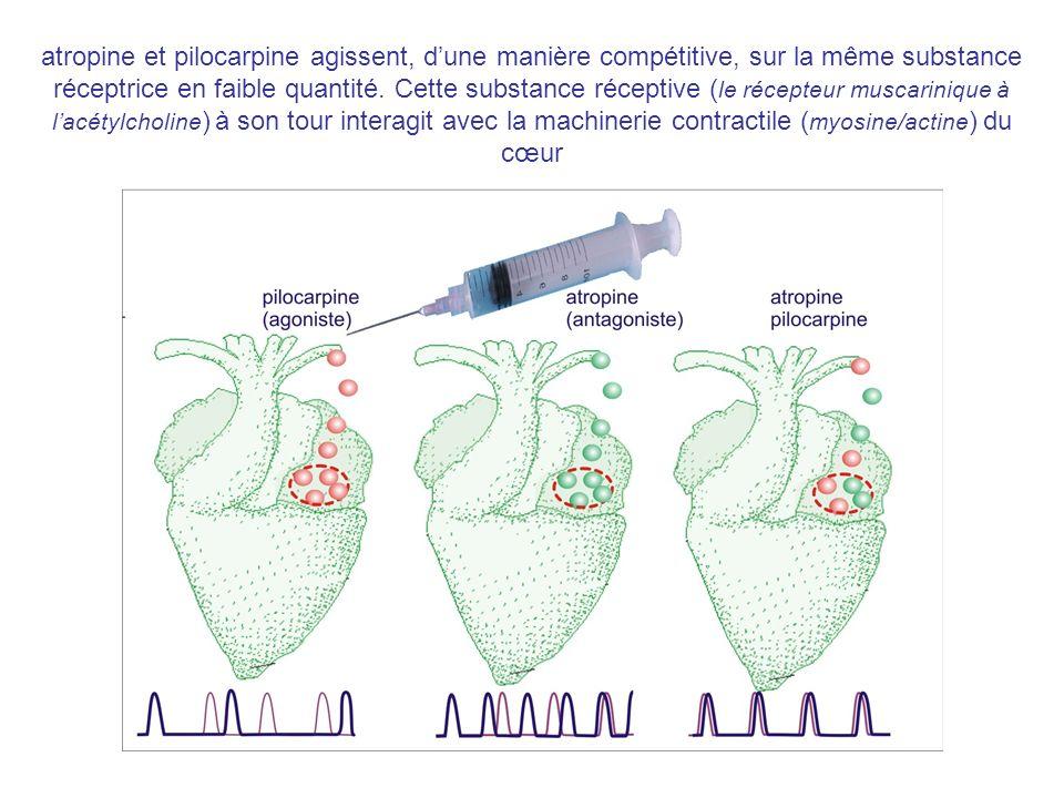 atropine et pilocarpine agissent, dune manière compétitive, sur la même substance réceptrice en faible quantité. Cette substance réceptive ( le récept