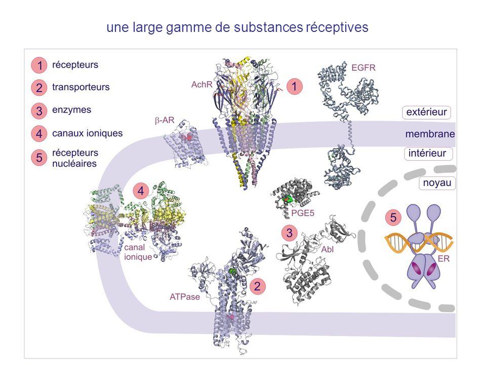 Le canal de sodium potentiel-dépendant, impliqué dans la transmission des signaux dans les nerfs et dans la contraction musculaire, est le cible dun large gamme des toxines (qui paralysent) et médicaments