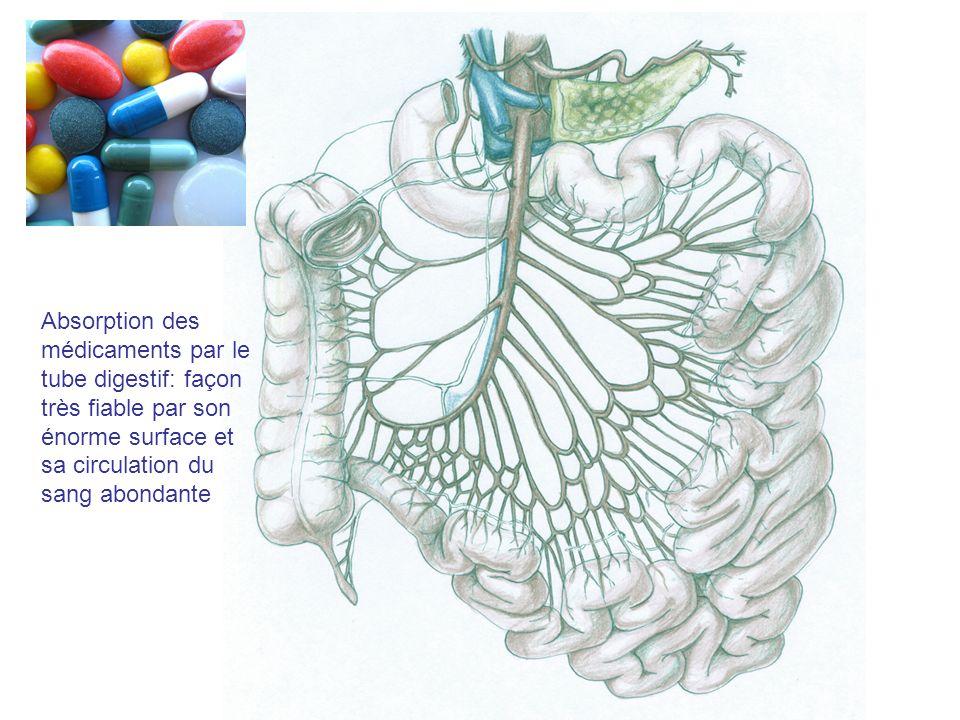 Absorption des médicaments par le tube digestif: façon très fiable par son énorme surface et sa circulation du sang abondante