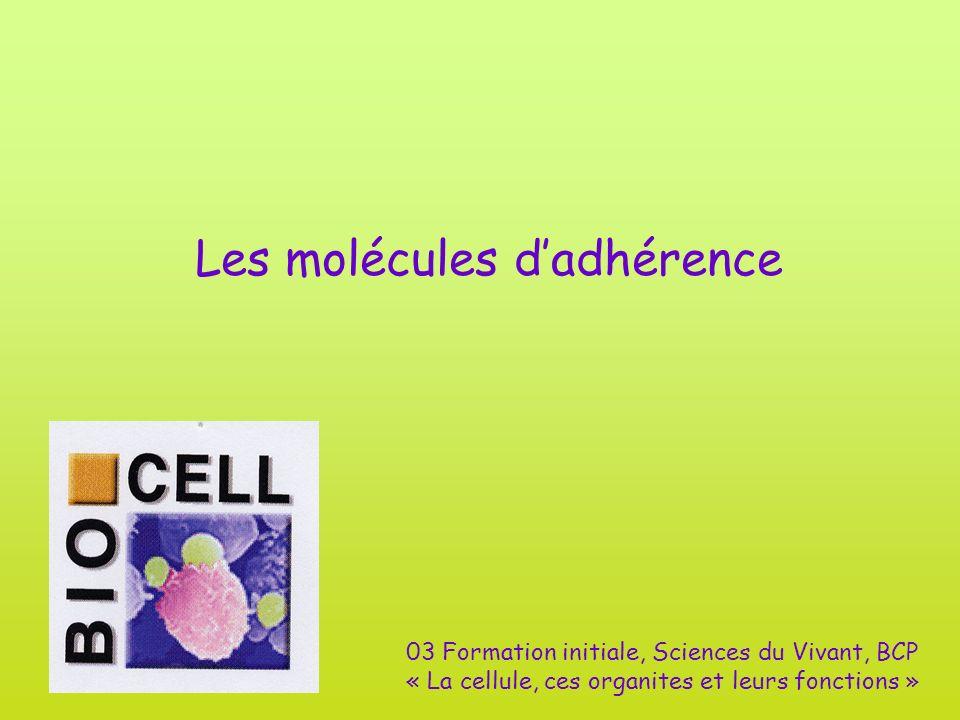 Les molécules dadhérence 03 Formation initiale, Sciences du Vivant, BCP « La cellule, ces organites et leurs fonctions »