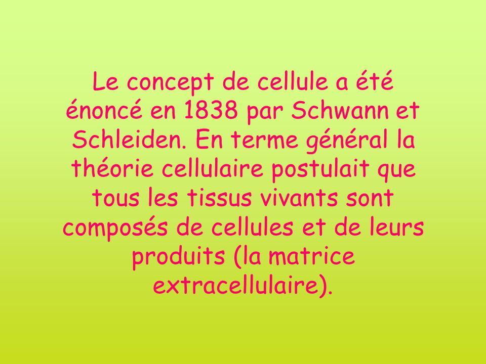 Le concept de cellule a été énoncé en 1838 par Schwann et Schleiden. En terme général la théorie cellulaire postulait que tous les tissus vivants sont