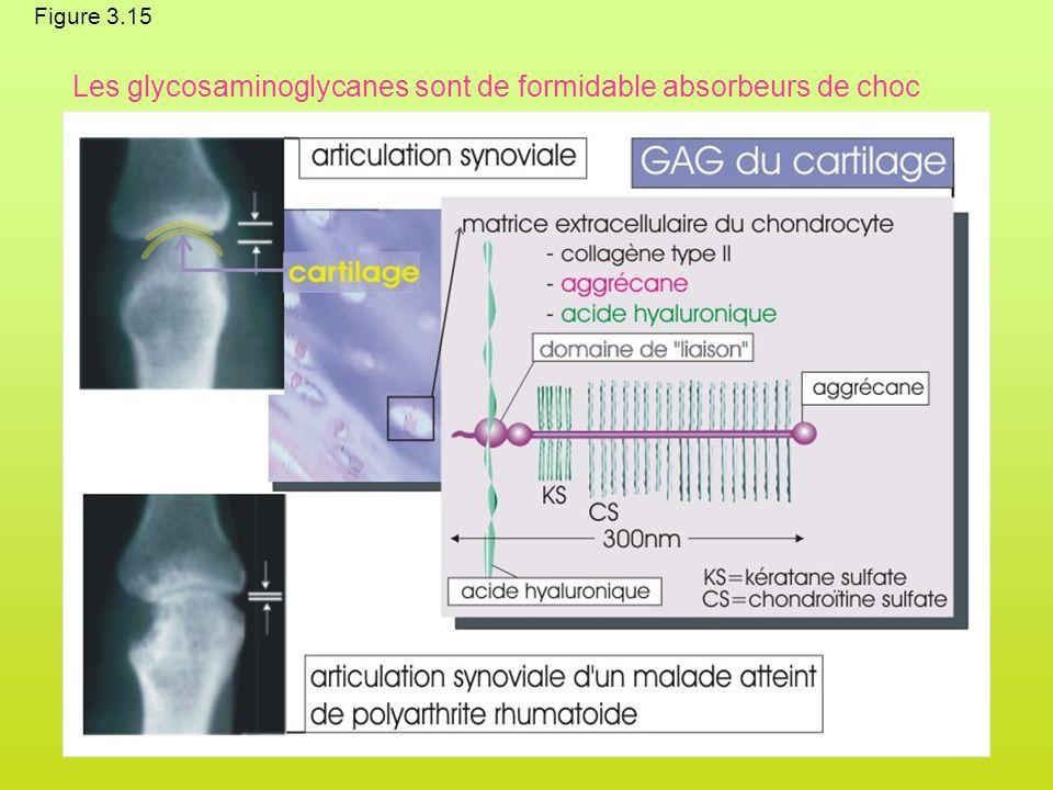 Figure 3.15 Les glycosaminoglycanes sont de formidable absorbeurs de choc