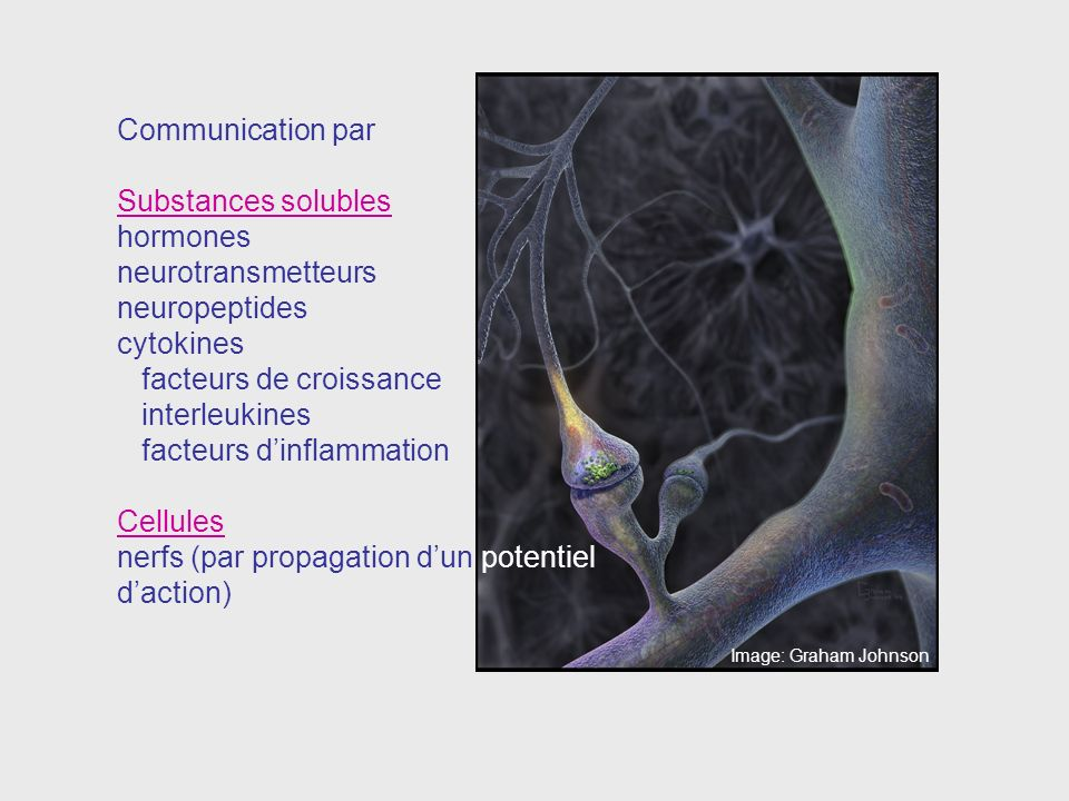 Communication par Substances solubles hormones neurotransmetteurs neuropeptides cytokines facteurs de croissance interleukines facteurs dinflammation