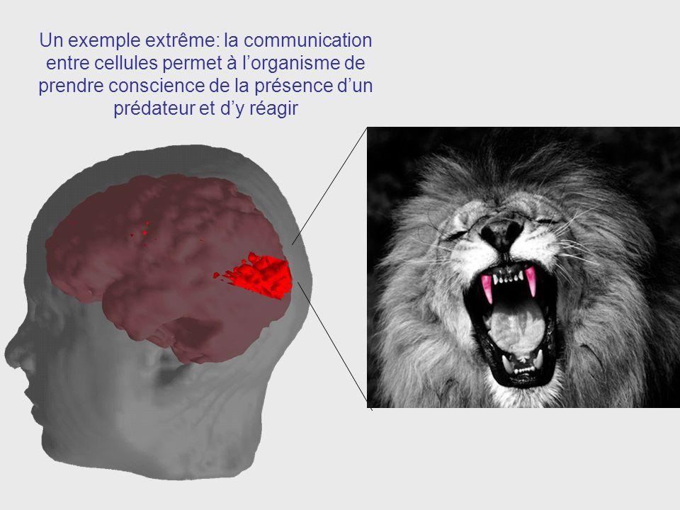 Un exemple extrême: la communication entre cellules permet à lorganisme de prendre conscience de la présence dun prédateur et dy réagir