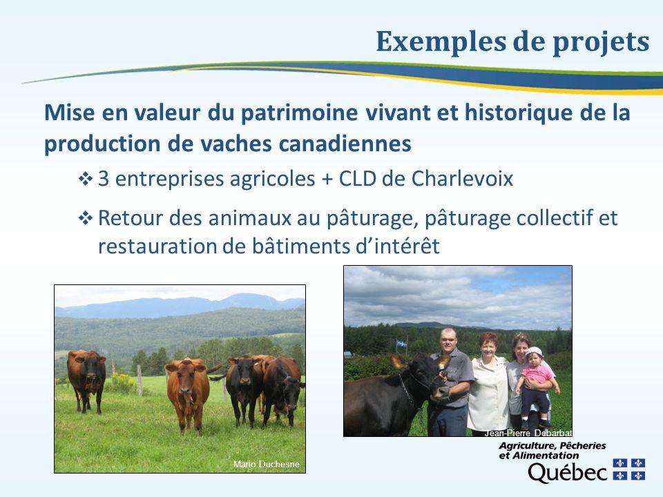 Exemples de projets Mise en valeur du patrimoine vivant et historique de la production de vaches canadiennes 3 entreprises agricoles + CLD de Charlevo
