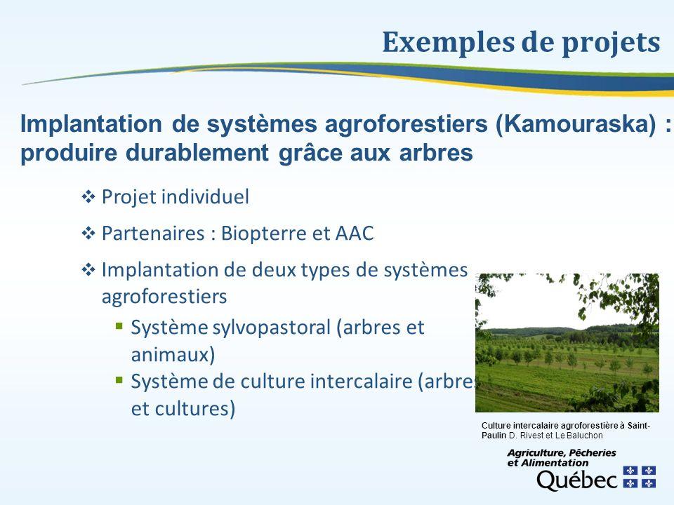 Exemples de projets Projet individuel Partenaires : Biopterre et AAC Implantation de deux types de systèmes agroforestiers Système sylvopastoral (arbr