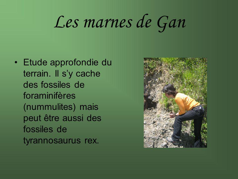 Les marnes de Gan Etude approfondie du terrain. Il sy cache des fossiles de foraminifères (nummulites) mais peut être aussi des fossiles de tyrannosau