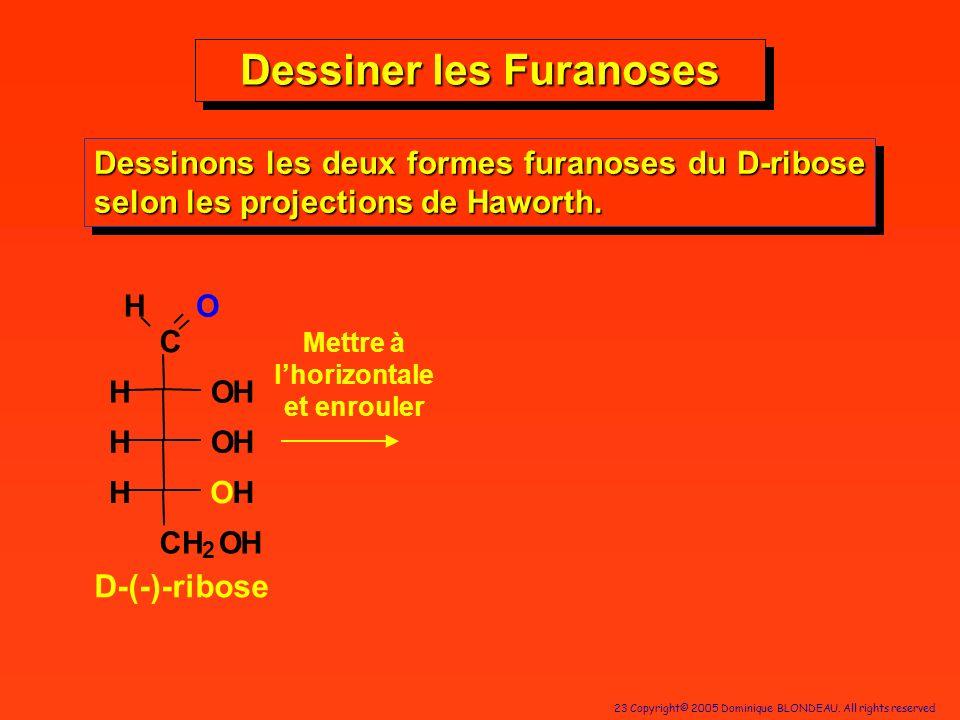 23 Copyright© 2005 Dominique BLONDEAU. All rights reserved Dessiner les Furanoses Dessinons les deux formes furanoses du D-ribose selon les projection