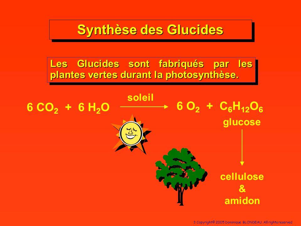 3 Copyright© 2005 Dominique BLONDEAU. All rights reserved Synthèse des Glucides Les Glucides sont fabriqués par les plantes vertes durant la photosynt