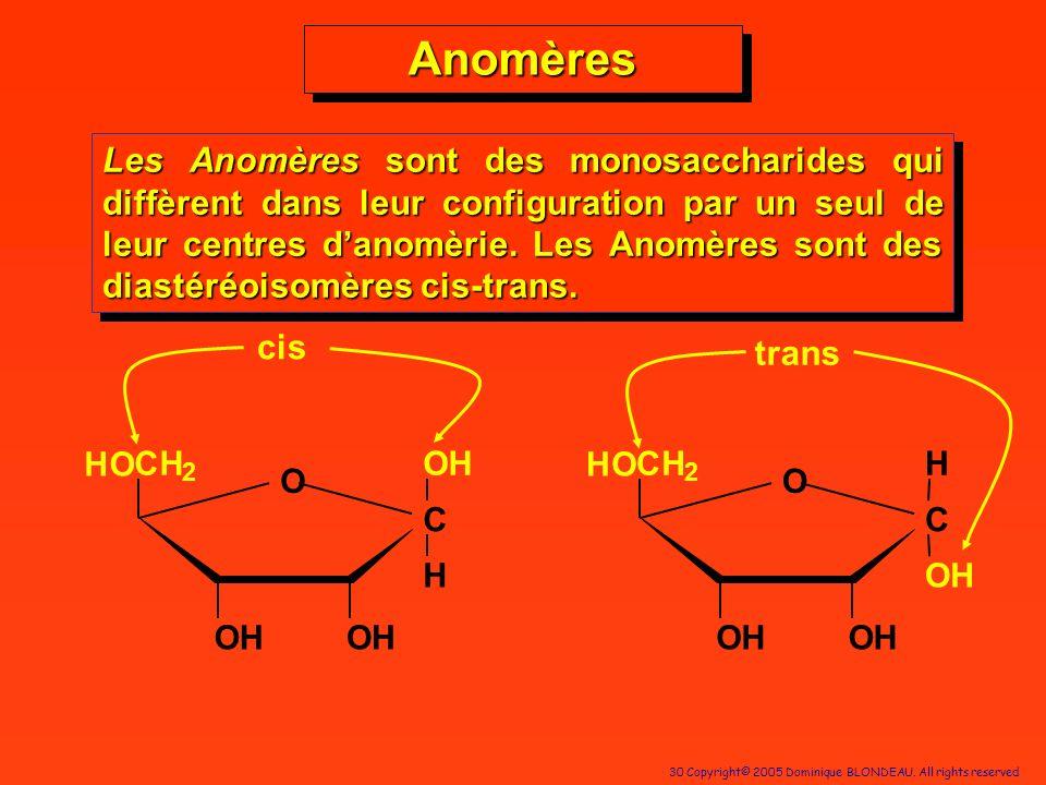 30 Copyright© 2005 Dominique BLONDEAU. All rights reserved AnomèresAnomères Les Anomères sont des monosaccharides qui diffèrent dans leur configuratio