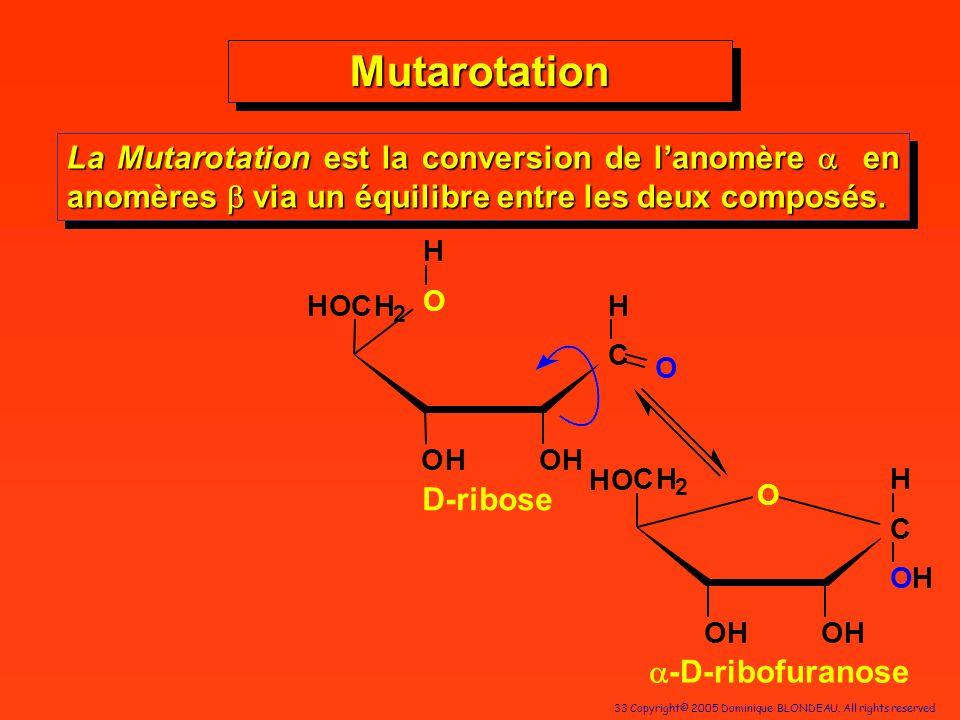 33 Copyright© 2005 Dominique BLONDEAU. All rights reserved MutarotationMutarotation La Mutarotation est la conversion de lanomère en anomères via un é