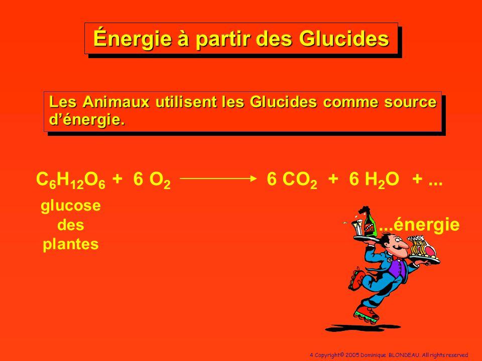 4 Copyright© 2005 Dominique BLONDEAU. All rights reserved Énergie à partir des Glucides Les Animaux utilisent les Glucides comme source dénergie. Les
